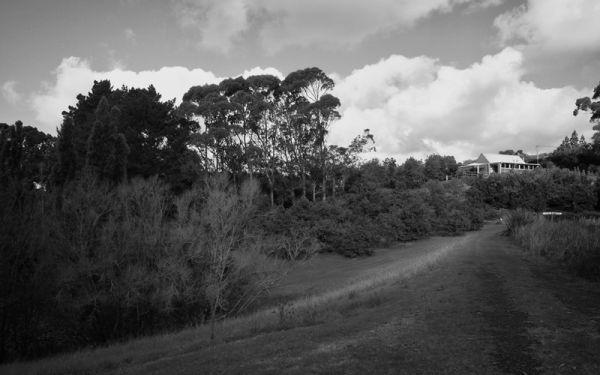Macadamia Nut Farm, New Zealand