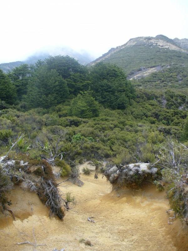 kaweka forest