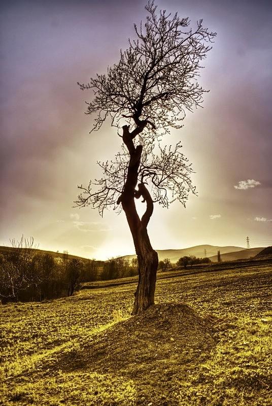 درخت خزان