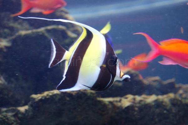 Camden Fishes,NJ