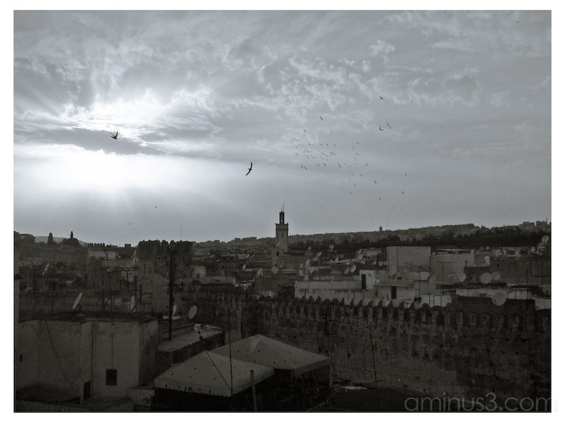 Birds flying in the sun over Fez, Morocco