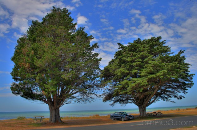 large trees on St Leonard's Beach in Victoria