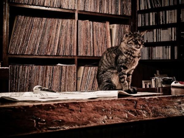 cat sitting on the counter of a jazz bar, Kanazawa