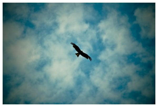 Hawk circling above the sky in Wajima, Ishikawa