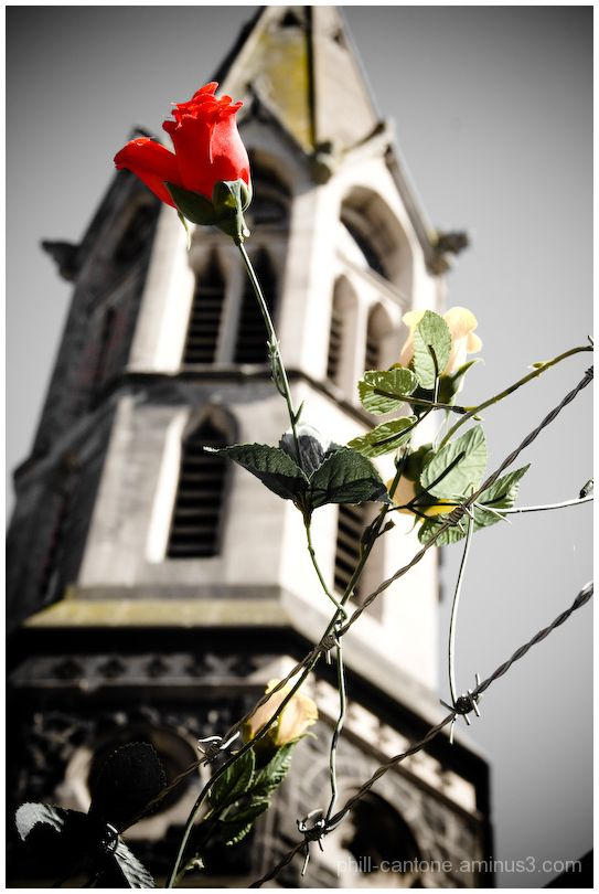 Roses tied to barbed wire in a convent