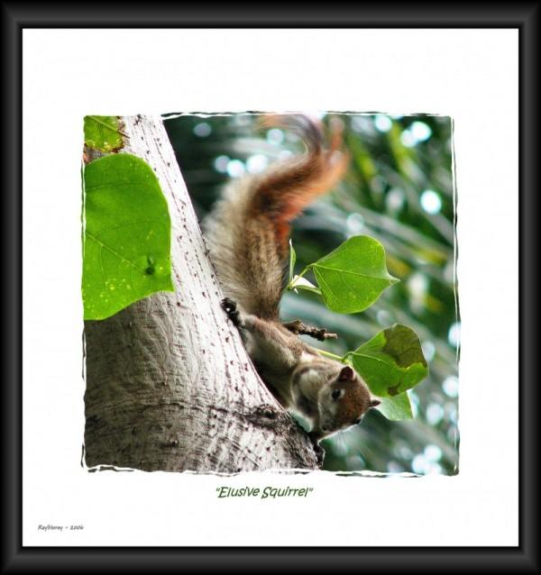 Wild squirrel at large in Bangkok