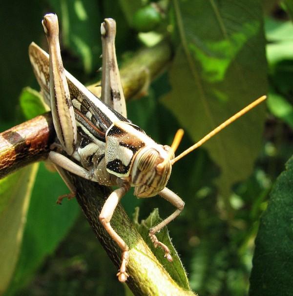 Grasshopper takes the sun.