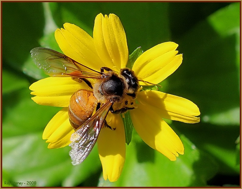 Bee embraces flower