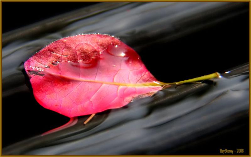 Bleeding leaf