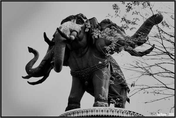 Three-headed Elephant