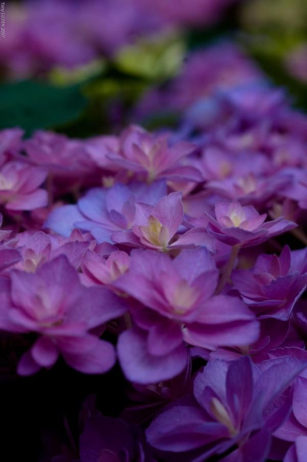 fleurs de couleur, flowers color