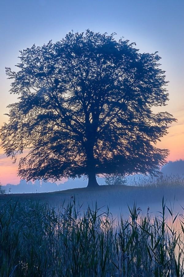 arbre au bord de l'eau brume
