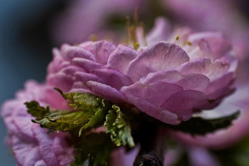 bloom, fleurs, color, couleur, kleur