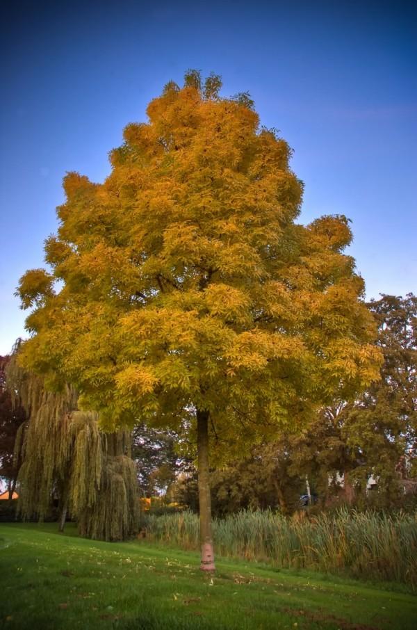 tree sur ciel bleu