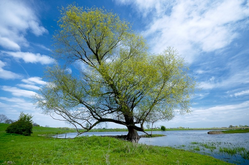 Tree over Ijssel, Duiven