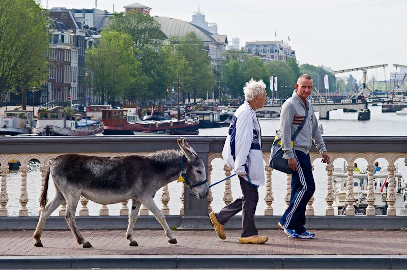 blauwbrug, amsterdam, donkey,