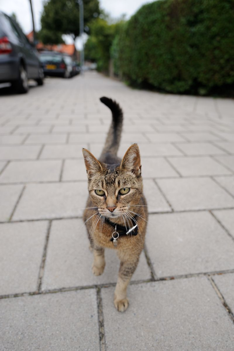 Cat, Middenweg, Haarlem