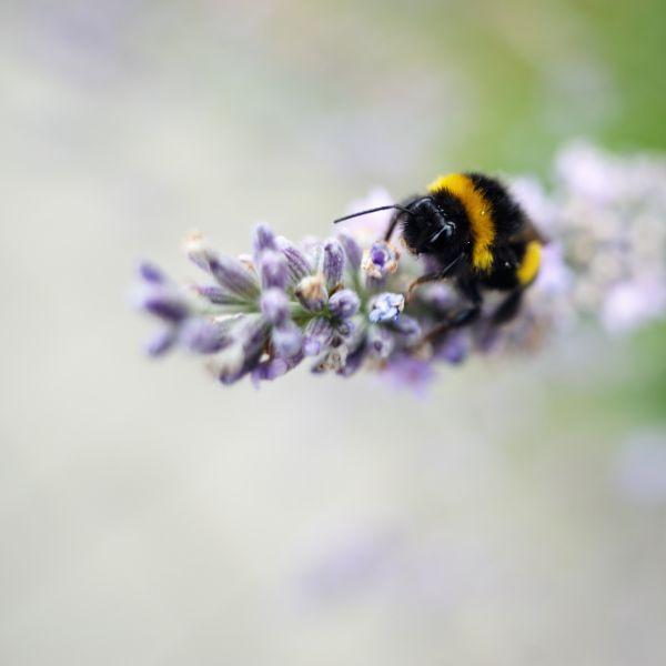 Bumble Bee, Orionweg, Haarlem