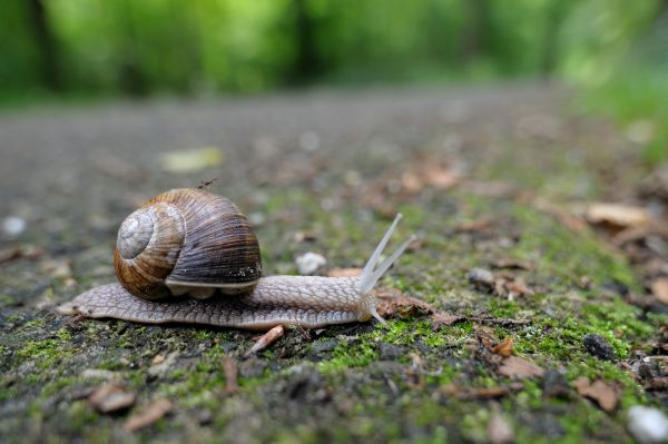 vineyard snail ride by an ant, Leyduin, Heemstede,