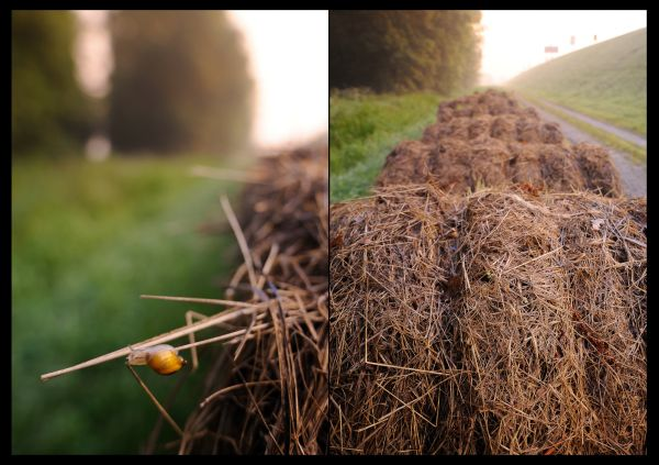 """snail on a """"Hay Bales"""" in the morning light"""