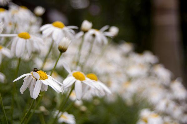 white blooms!!!!!