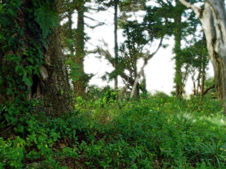 Floresta Mágica