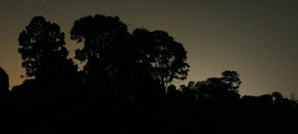 night sky trees dark singapore