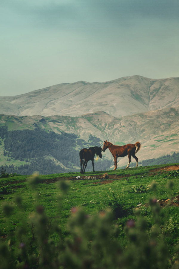 Photograph by Sahand Ghalizadeh at Masal Heights