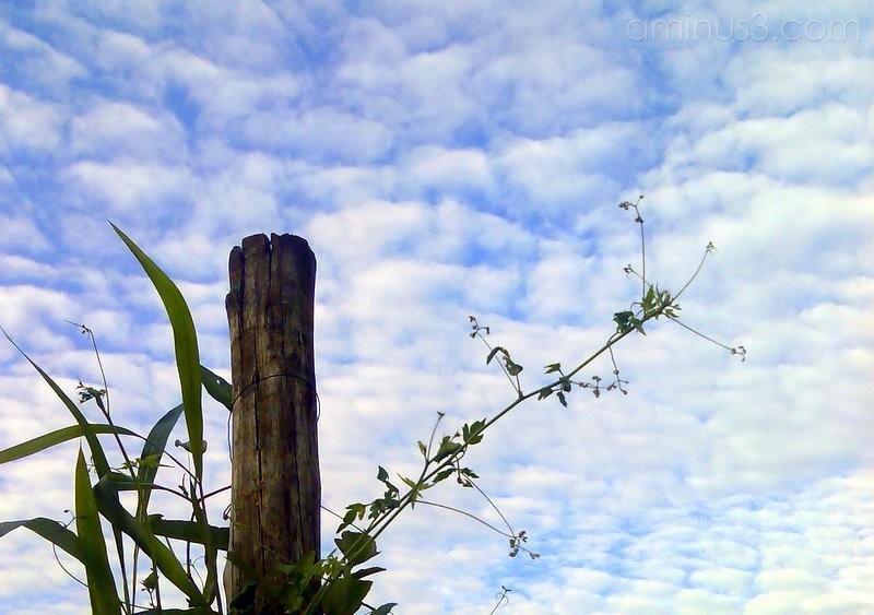 Grass, sky