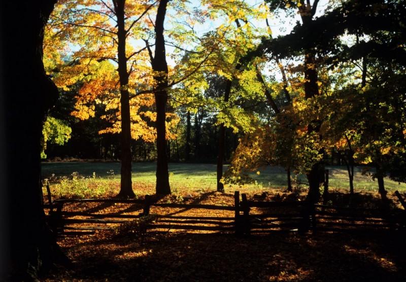 Jockey Hollow (Autumn 2007)