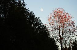 autumn brillance