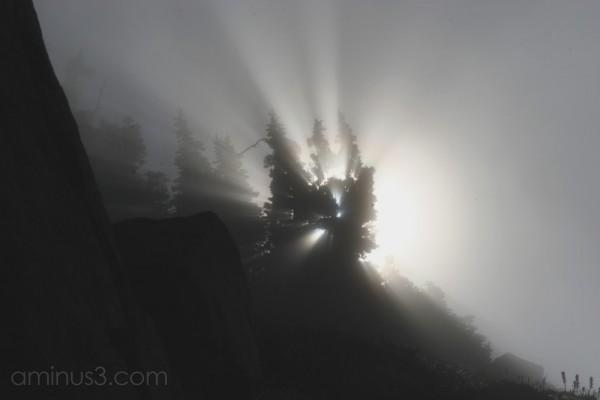 Light Breaking through trees; Mt Rainier, WA