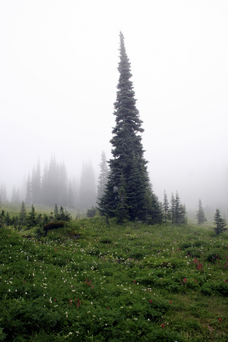 Look honey! It's a funny tree in the fog!