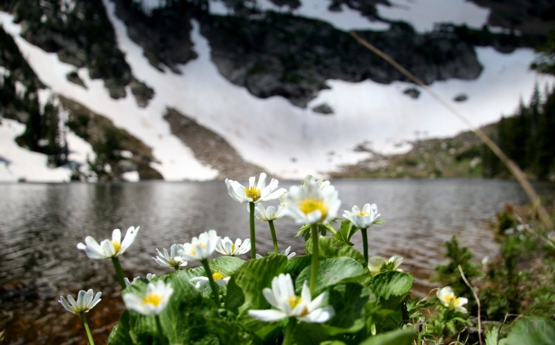 Mountain Lake..and flowers
