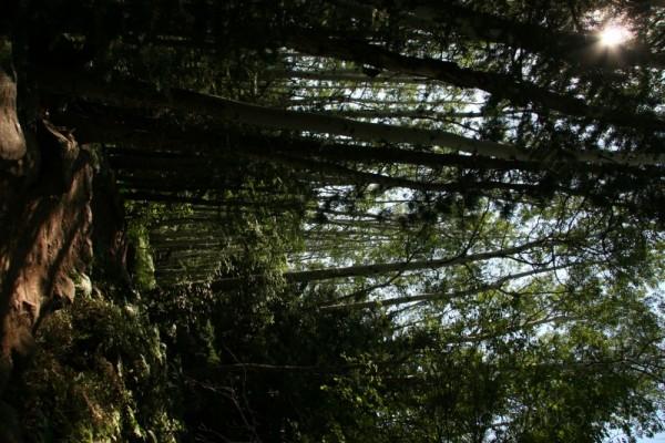 Darkened Path