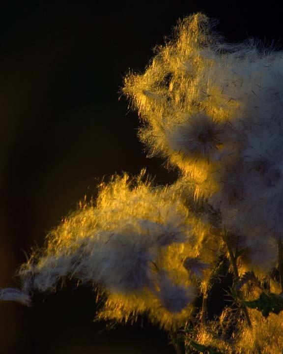 Weeds weeds, beautiful weeds