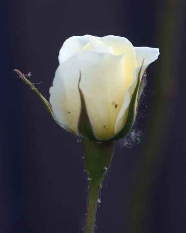 A rose by any other name . . .