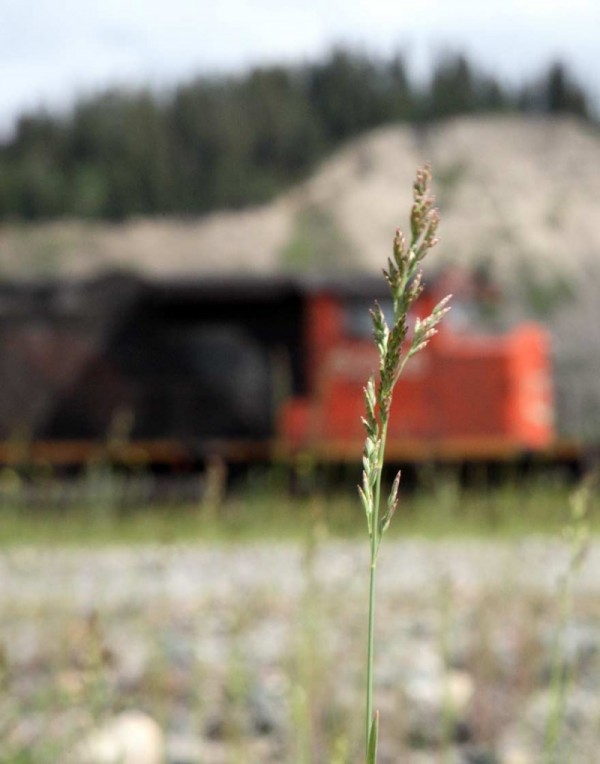 CN Railway Grass