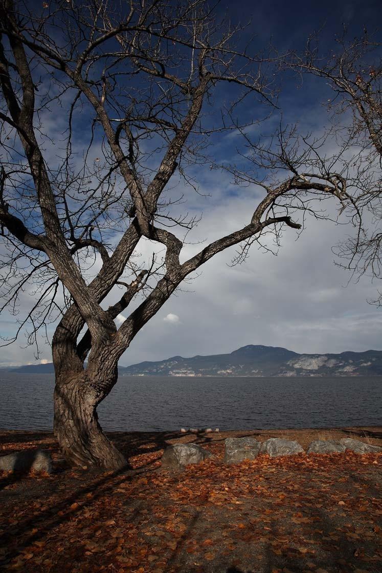 Stuart Lake Tree