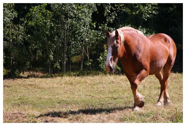 One Horsepower