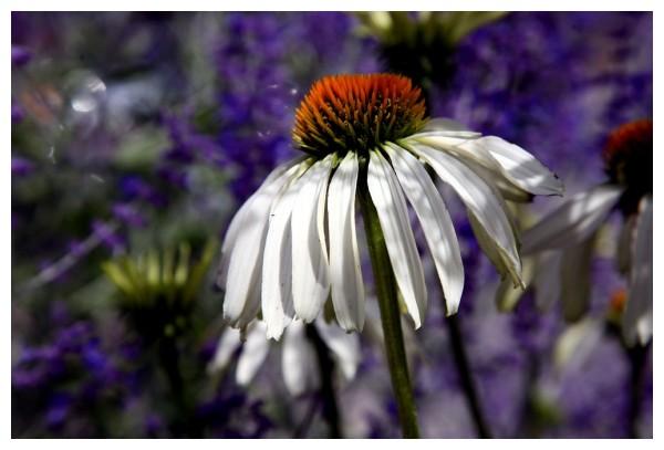 Philosopher Flower