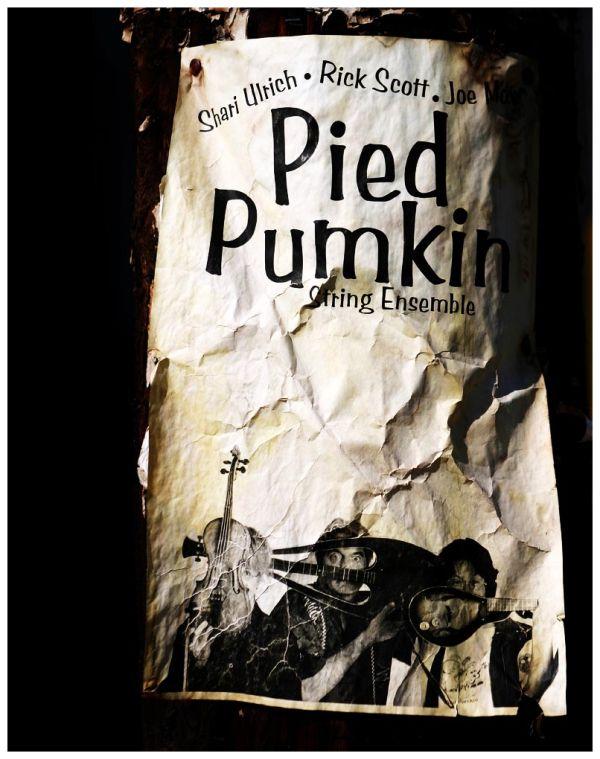 Pied Pumkin