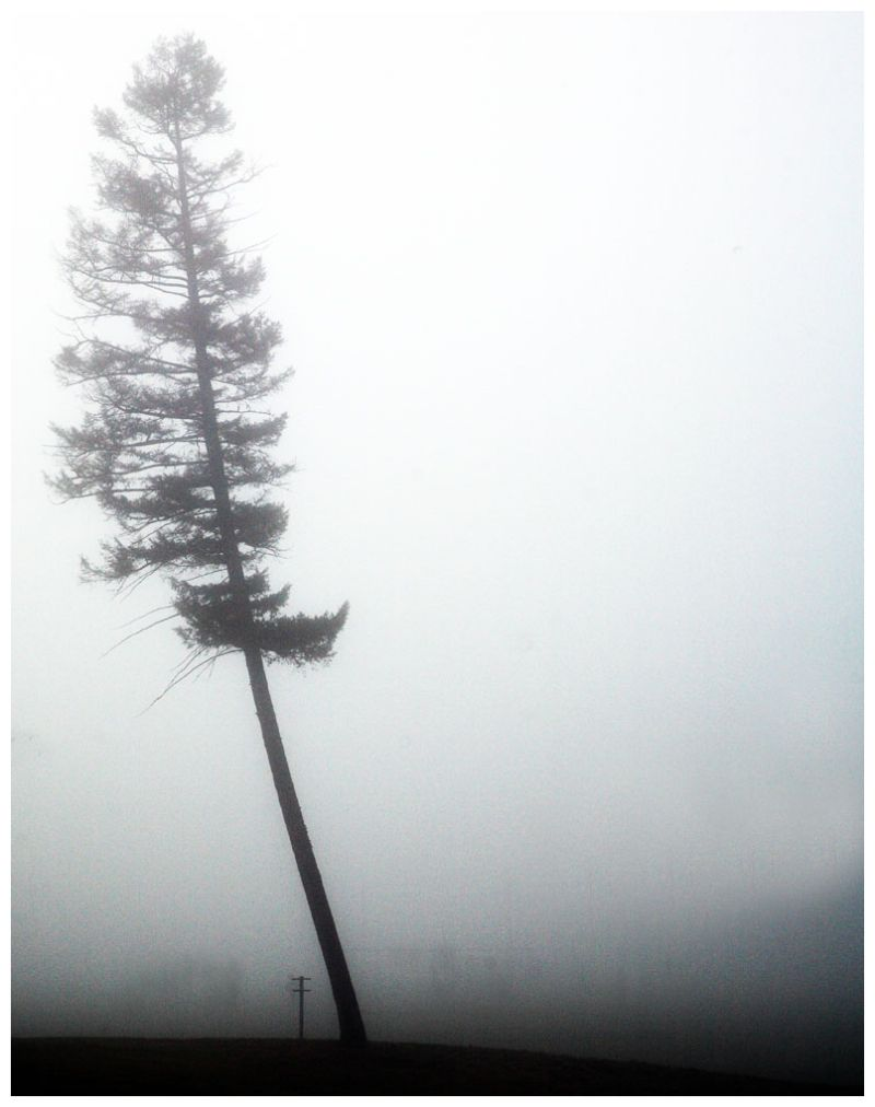 Foggy Day Tree