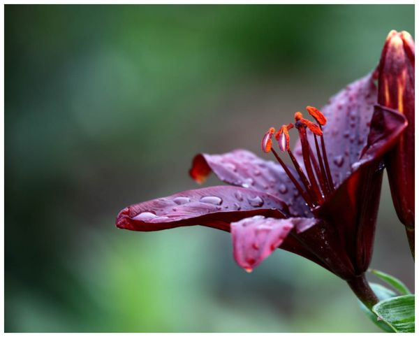 Blessed Rain