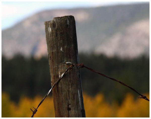 Falling Fall Fence