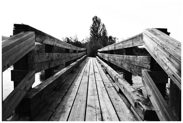 Scout Island Bridge