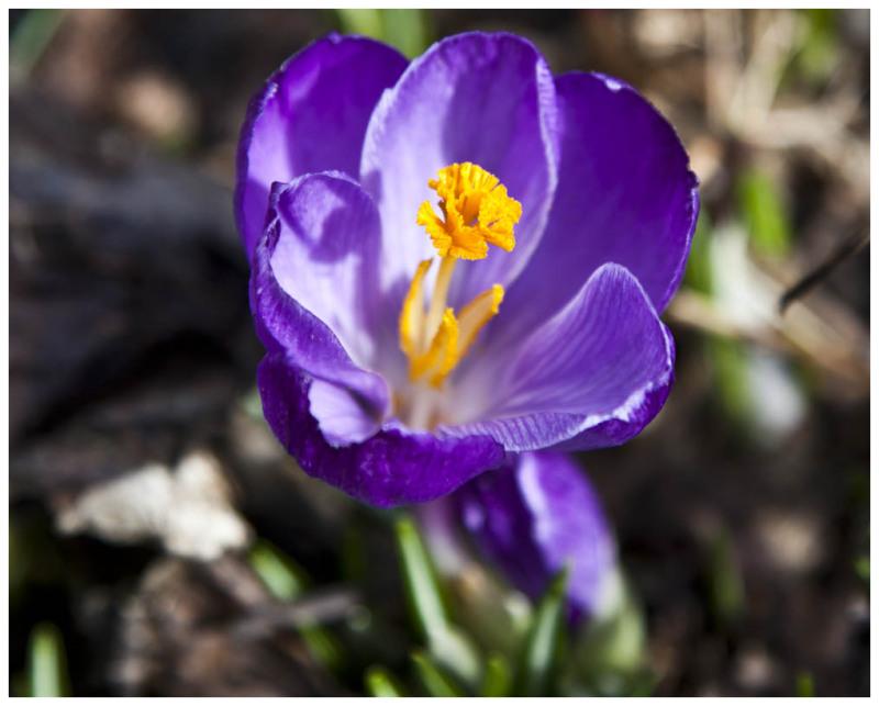 Enjoying The Spring Sunshine