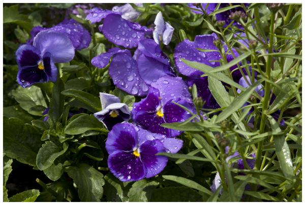 Celebrate! We Had Rain!