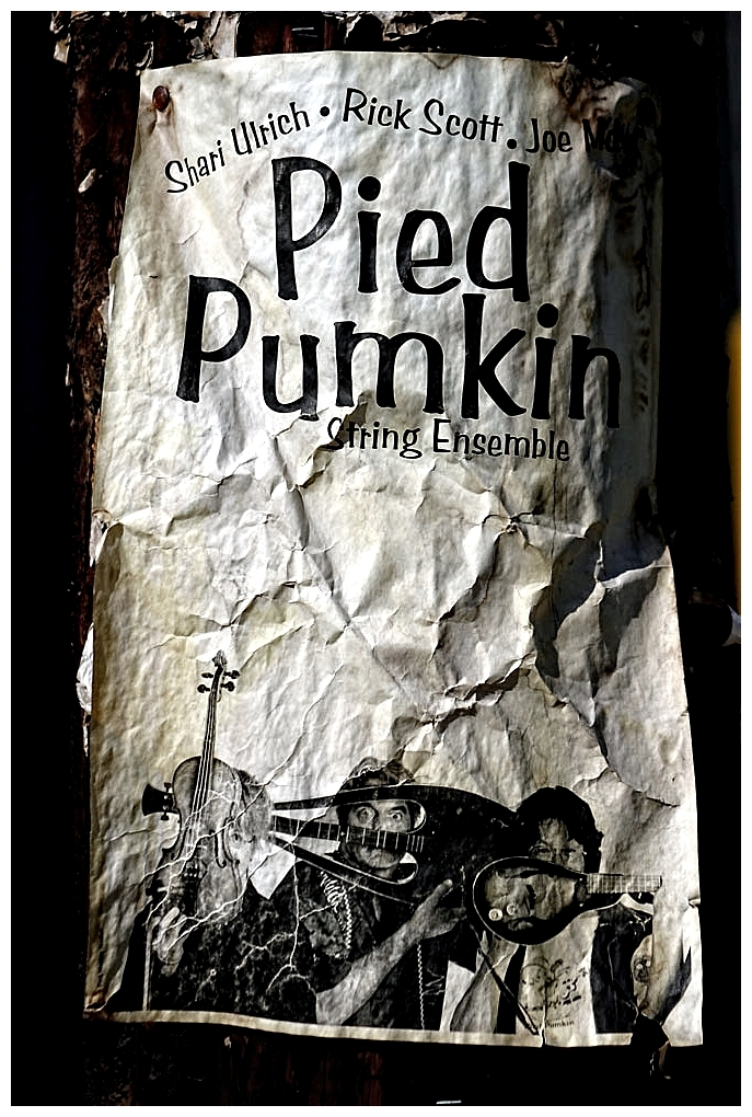 Pied Pumpkin