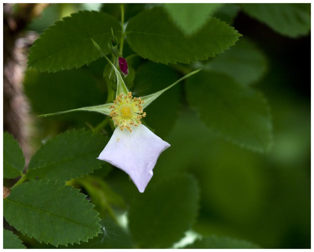 A Single Petal